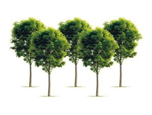 5_TREES_HR_CMYK